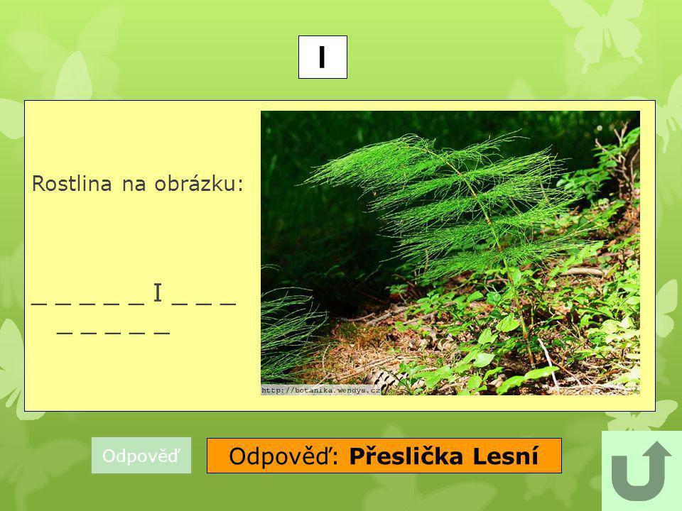 Odpověď: Přeslička Lesní
