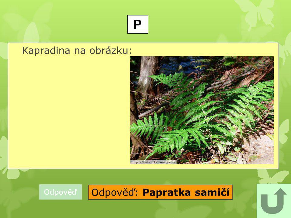 Odpověď: Papratka samičí