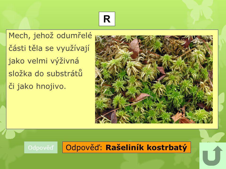 Odpověď: Rašeliník kostrbatý