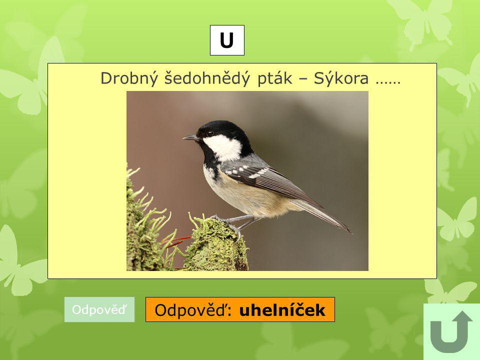 Drobný šedohnědý pták – Sýkora ……