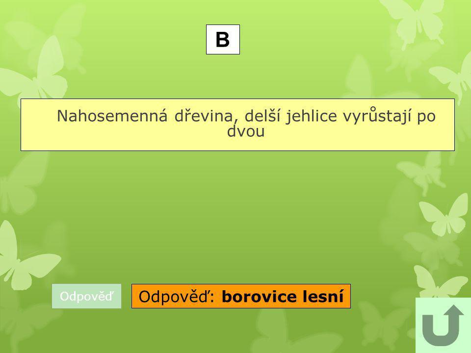 B Odpověď: borovice lesní