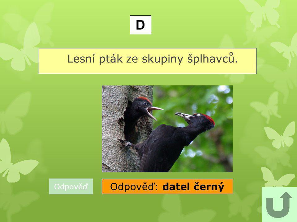 Lesní pták ze skupiny šplhavců.