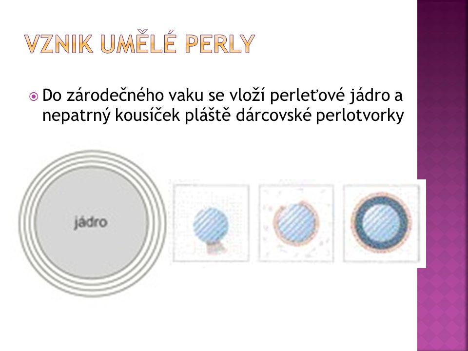 Vznik umělé perly Do zárodečného vaku se vloží perleťové jádro a nepatrný kousíček pláště dárcovské perlotvorky.
