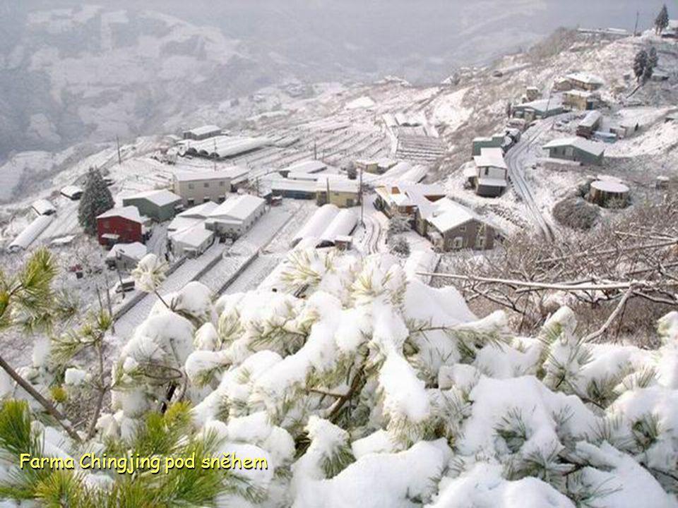 Farma Chingjing pod sněhem