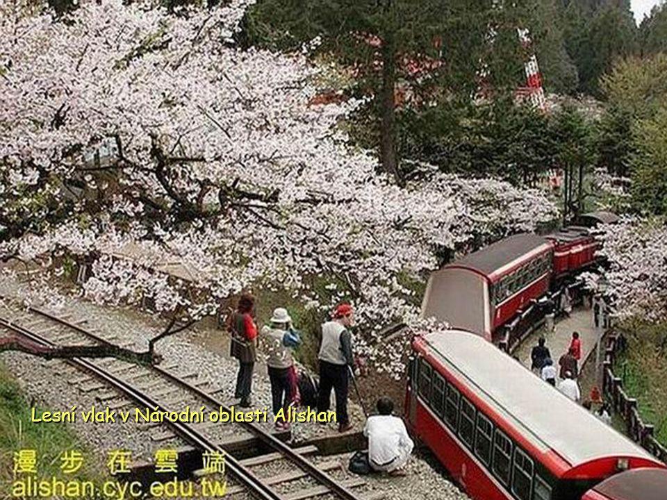 Lesní vlak v Národní oblasti Alishan
