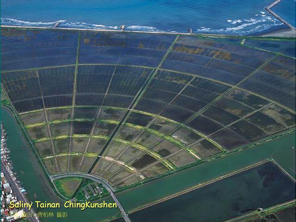 Saliny Tainan ChingKunshen