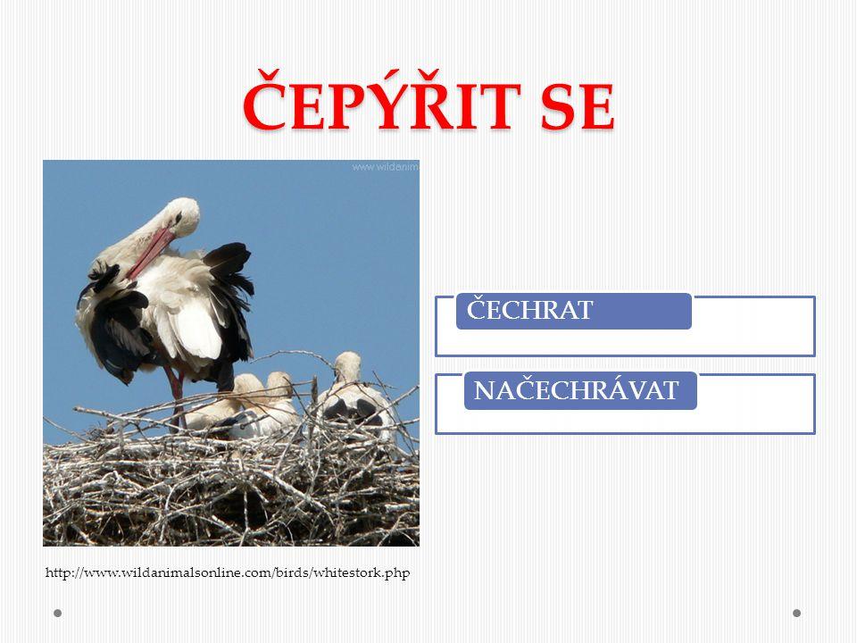 ČEPÝŘIT SE http://www.wildanimalsonline.com/birds/whitestork.php