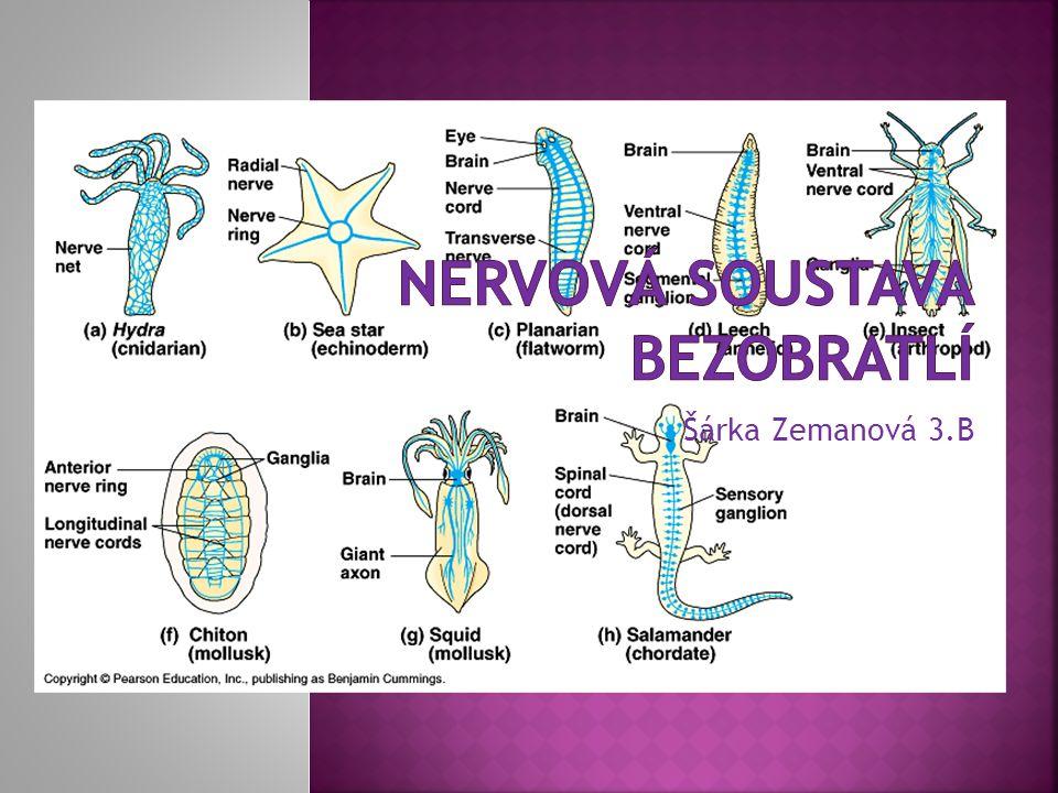 Nervová soustava bezobratlí