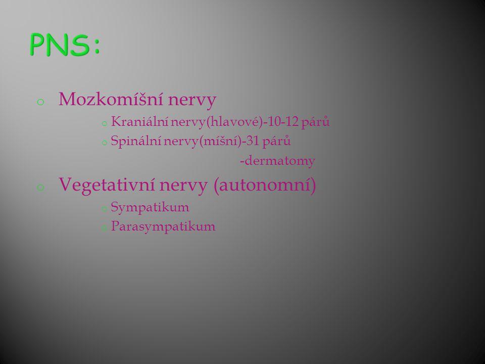 PNS: Mozkomíšní nervy Vegetativní nervy (autonomní)