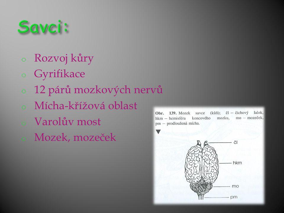 Savci: Rozvoj kůry Gyrifikace 12 párů mozkových nervů