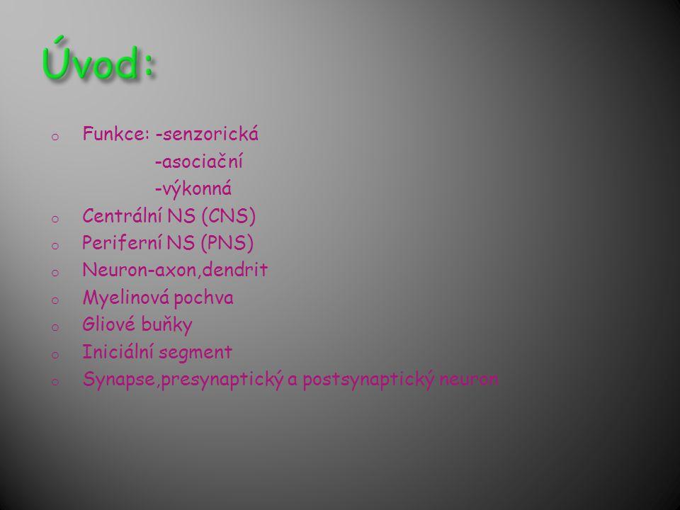 Úvod: Funkce: -senzorická -asociační -výkonná Centrální NS (CNS)