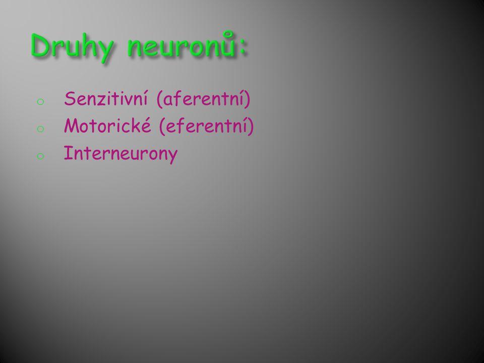 Druhy neuronů: Senzitivní (aferentní) Motorické (eferentní)