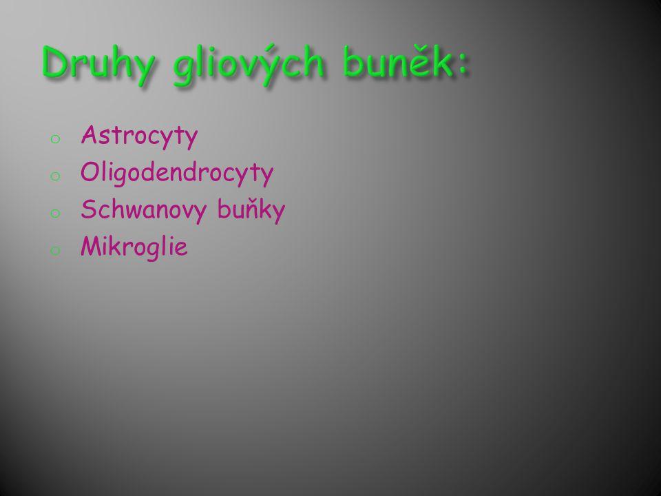 Druhy gliových buněk: Astrocyty Oligodendrocyty Schwanovy buňky
