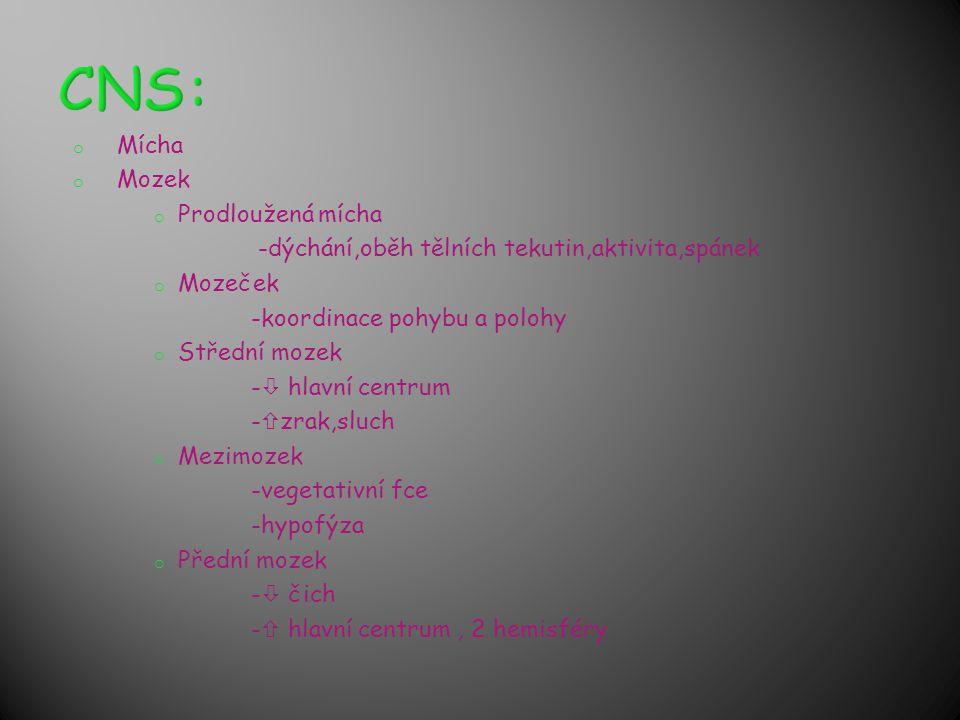 CNS: Mícha Mozek Prodloužená mícha