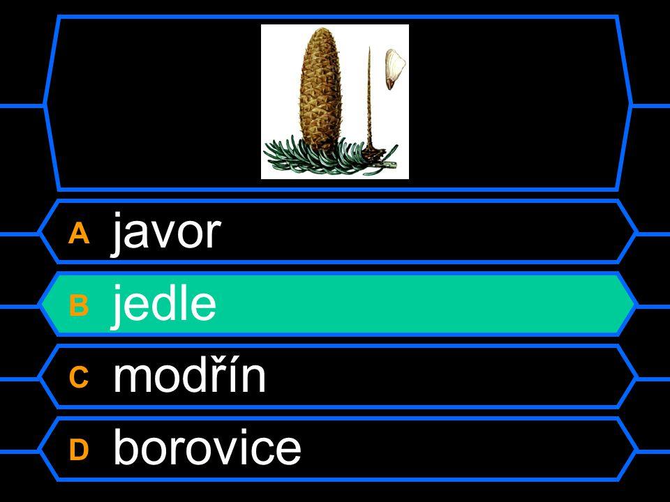 A javor B jedle C modřín D borovice