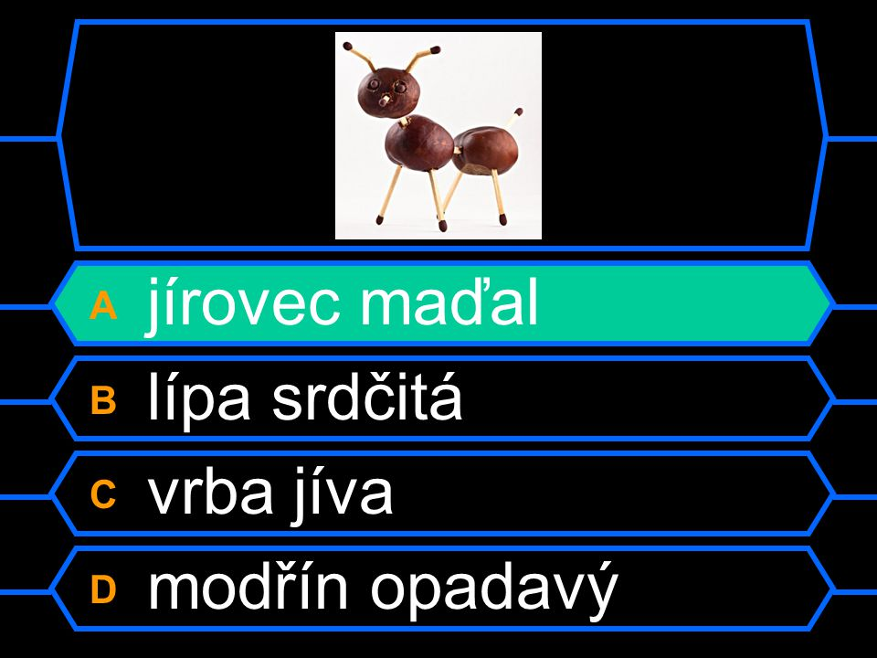A jírovec maďal B lípa srdčitá C vrba jíva D modřín opadavý