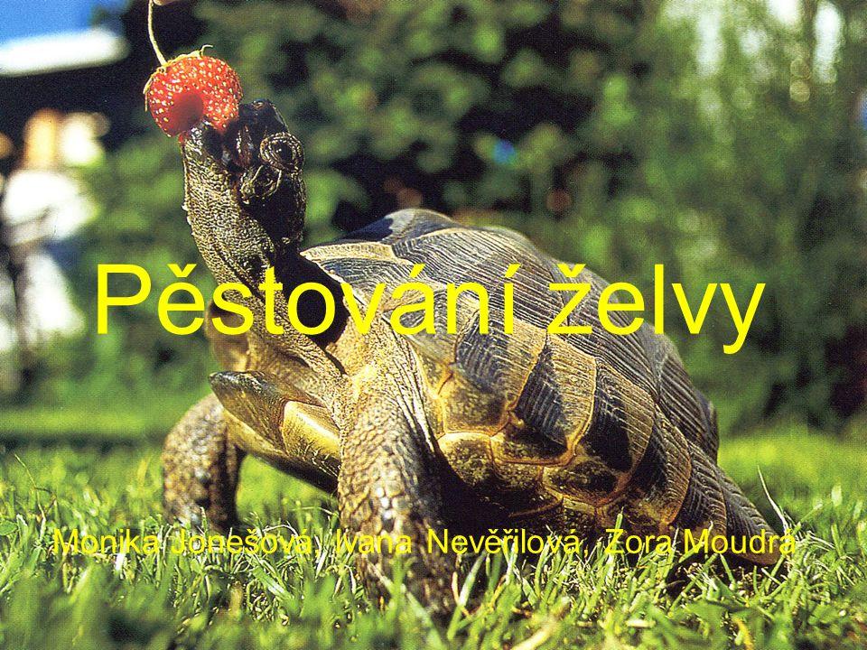 Pěstování želvy Monika Jonešová, Ivana Nevěřilová, Zora Moudrá