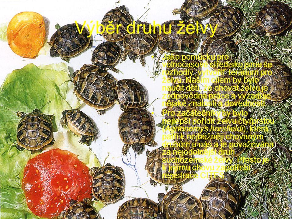 Výběr druhu želvy