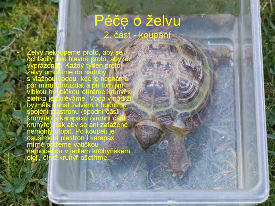 Péče o želvu 2. část - koupání