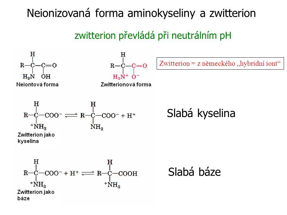 Neionizovaná forma aminokyseliny a zwitterion