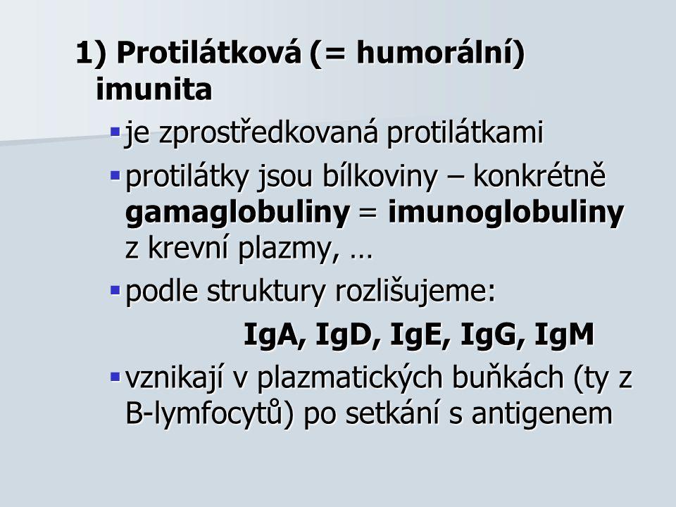 1) Protilátková (= humorální) imunita