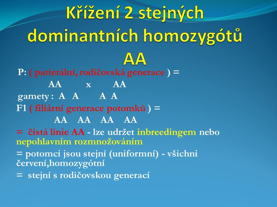 Křížení 2 stejných dominantních homozygótů AA