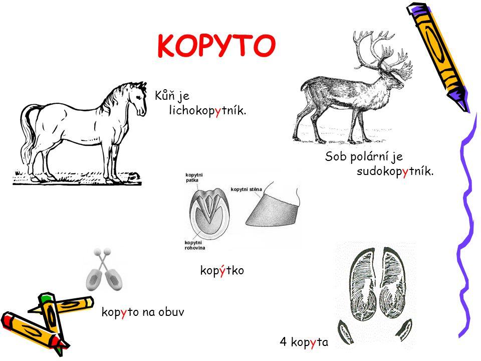 KOPYTO Kůň je lichokopytník. Sob polární je sudokopytník. kopýtko