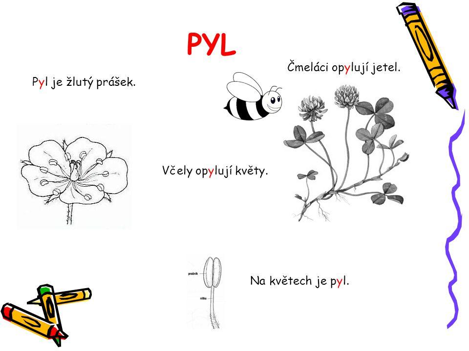 PYL Čmeláci opylují jetel. Pyl je žlutý prášek. Včely opylují květy.