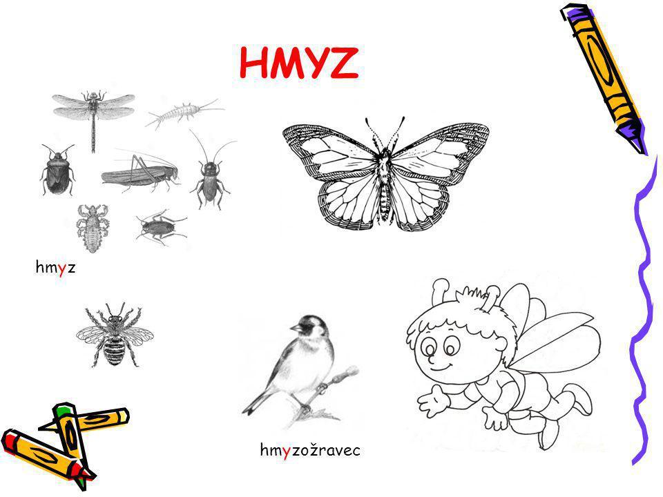 HMYZ hmyz hmyzožravec