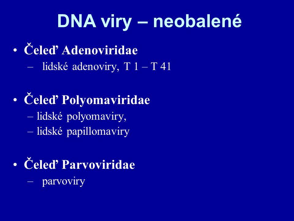 DNA viry – neobalené Čeleď Adenoviridae Čeleď Polyomaviridae