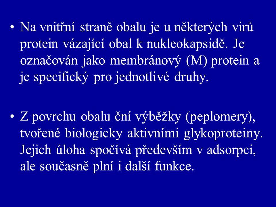 Na vnitřní straně obalu je u některých virů protein vázající obal k nukleokapsidě. Je označován jako membránový (M) protein a je specifický pro jednotlivé druhy.