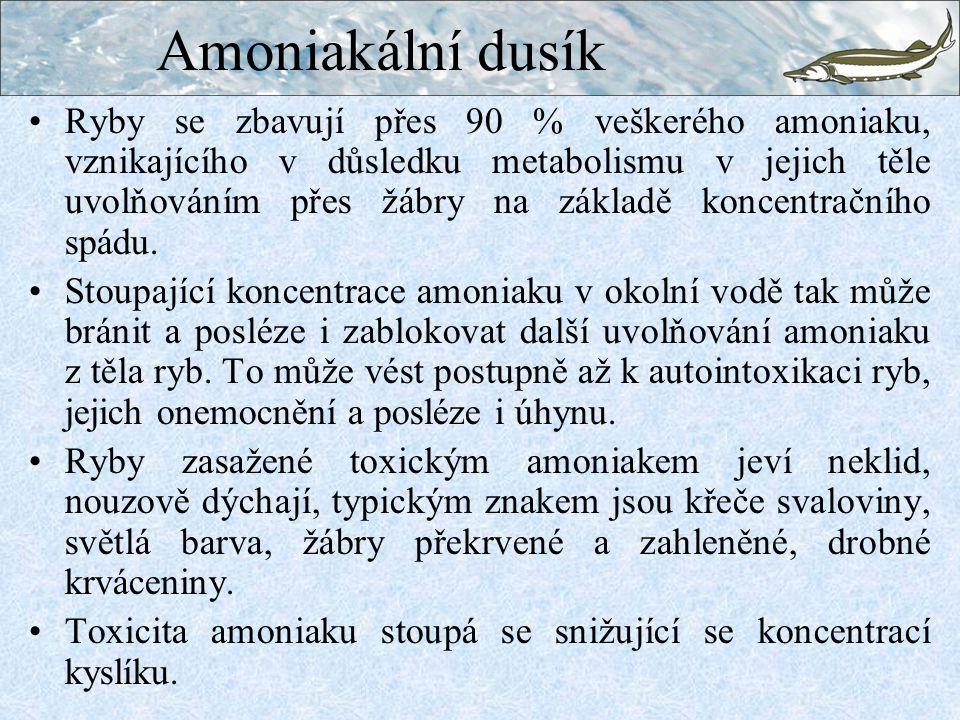 Amoniakální dusík