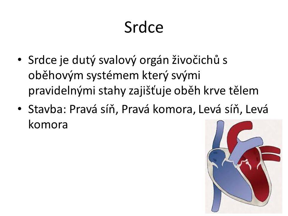 Srdce Srdce je dutý svalový orgán živočichů s oběhovým systémem který svými pravidelnými stahy zajišťuje oběh krve tělem.