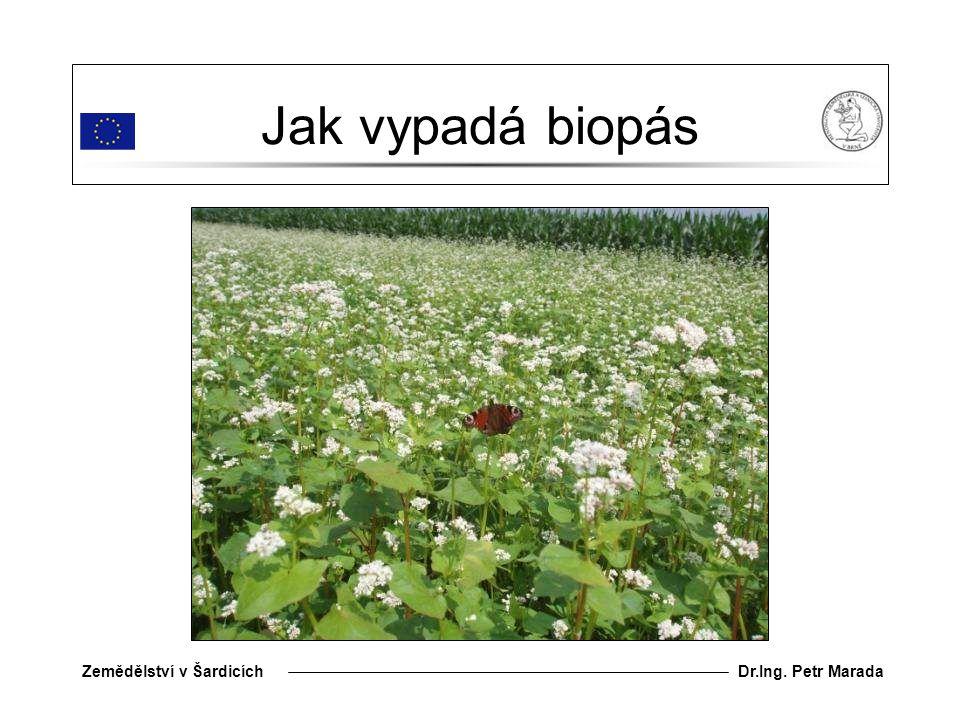 Jak vypadá biopás