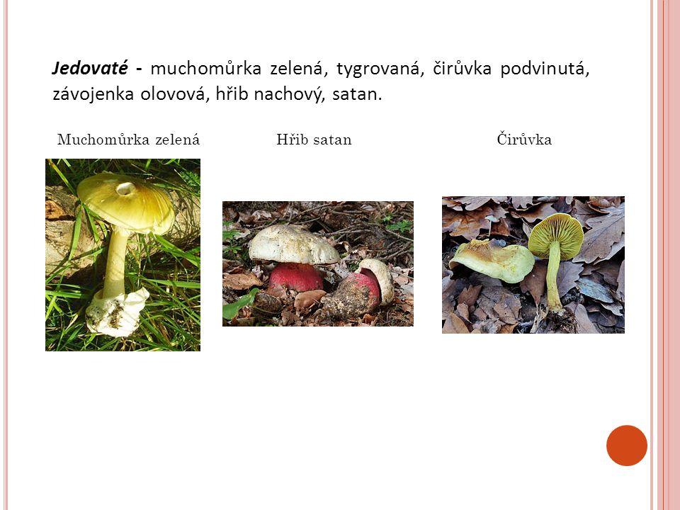 Jedovaté - muchomůrka zelená, tygrovaná, čirůvka podvinutá, závojenka olovová, hřib nachový, satan.