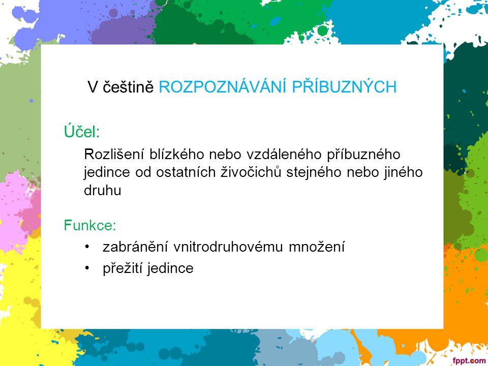 V češtině ROZPOZNÁVÁNÍ PŘÍBUZNÝCH