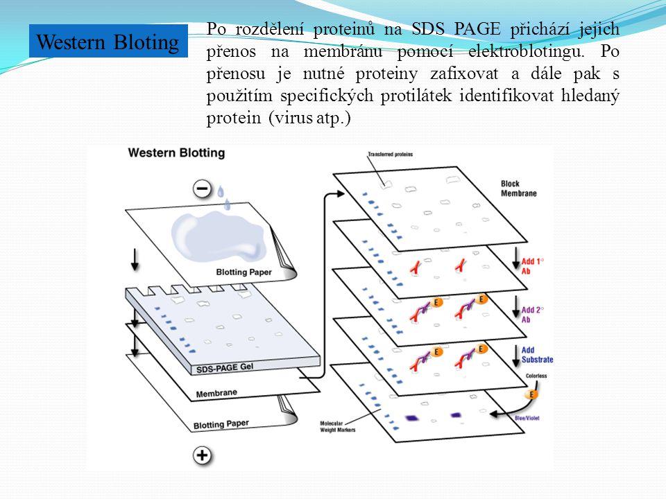 Po rozdělení proteinů na SDS PAGE přichází jejich přenos na membránu pomocí elektroblotingu. Po přenosu je nutné proteiny zafixovat a dále pak s použitím specifických protilátek identifikovat hledaný protein (virus atp.)