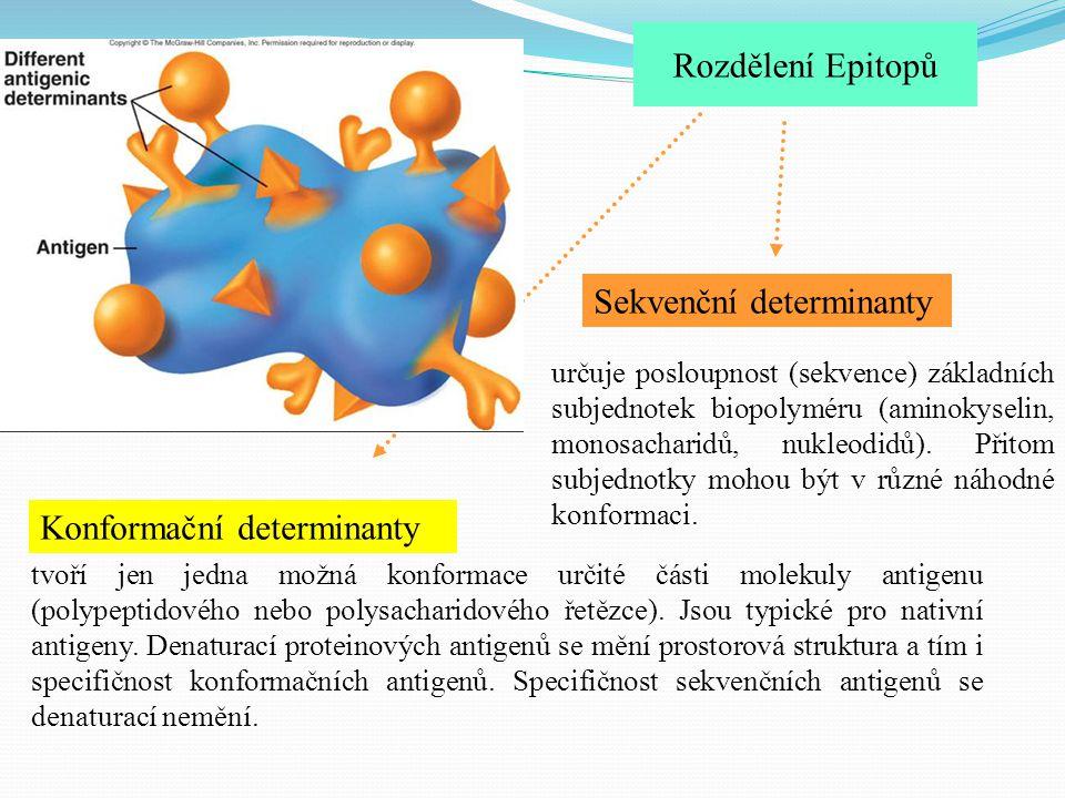 Sekvenční determinanty