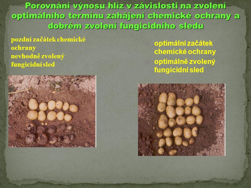 Porovnání výnosu hlíz v závislosti na zvolení optimálního termínu zahájení chemické ochrany a dobrém zvolení fungicidního sledu