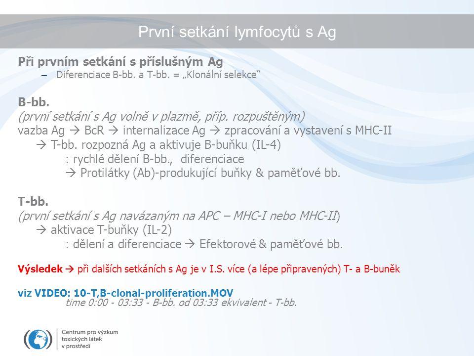 První setkání lymfocytů s Ag