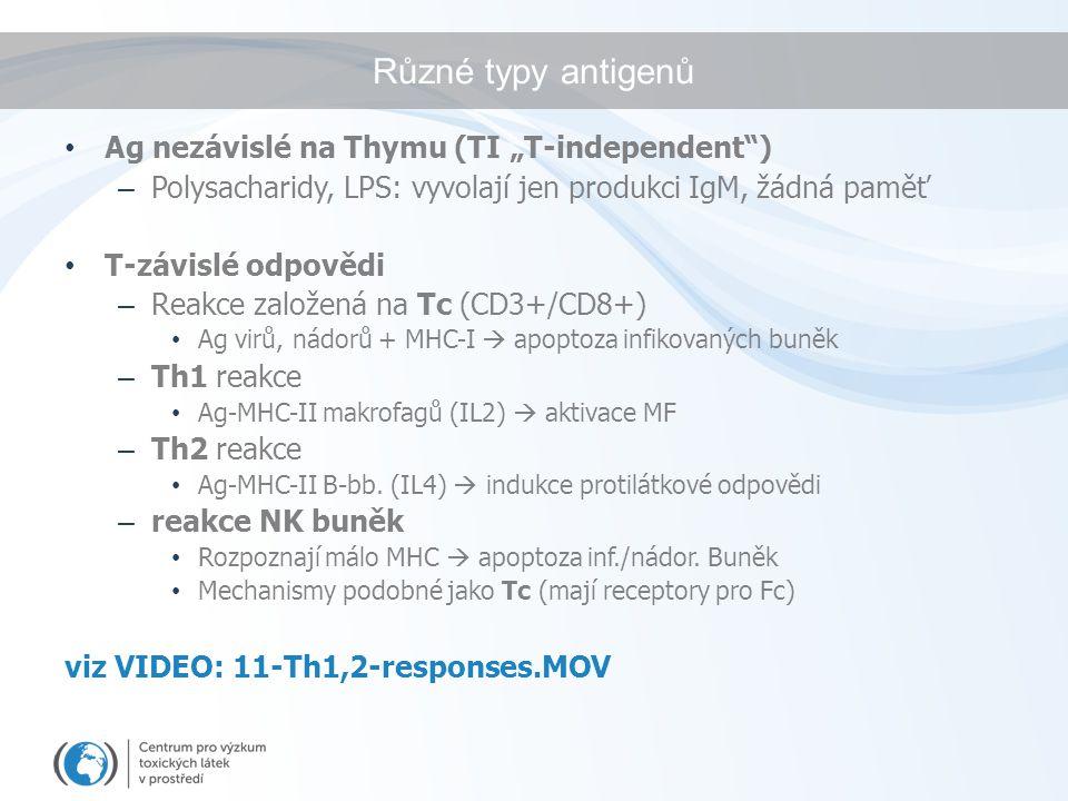 """Různé typy antigenů Ag nezávislé na Thymu (TI """"T-independent )"""