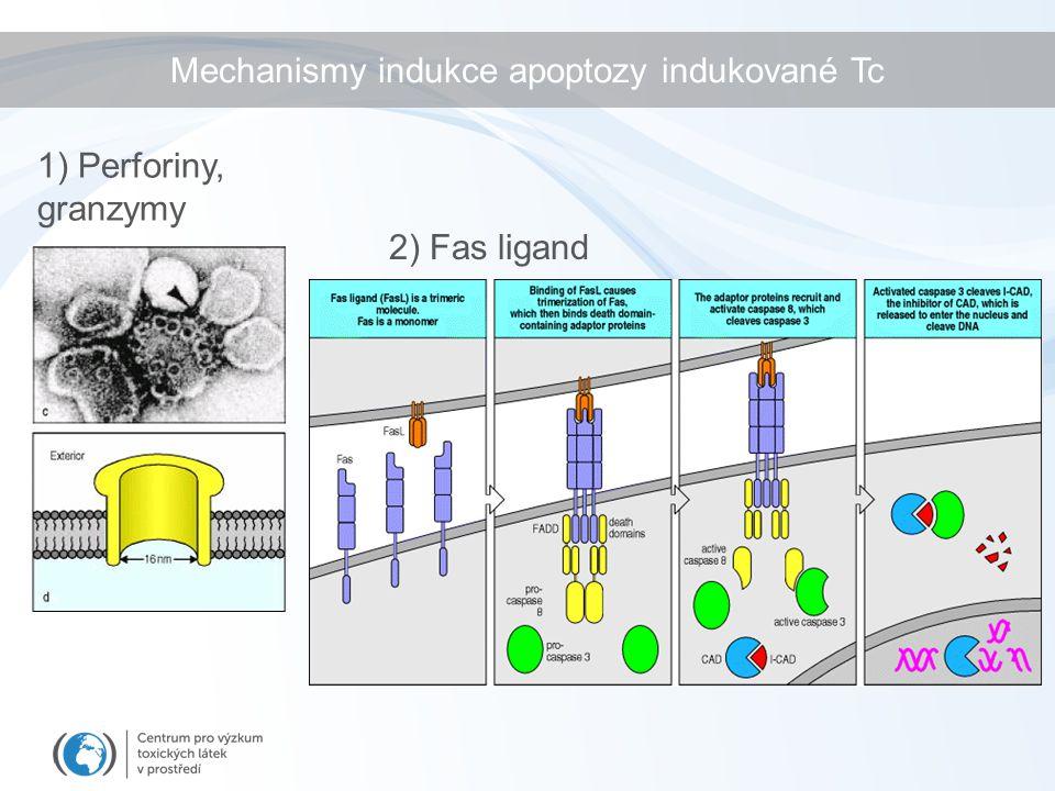 Mechanismy indukce apoptozy indukované Tc
