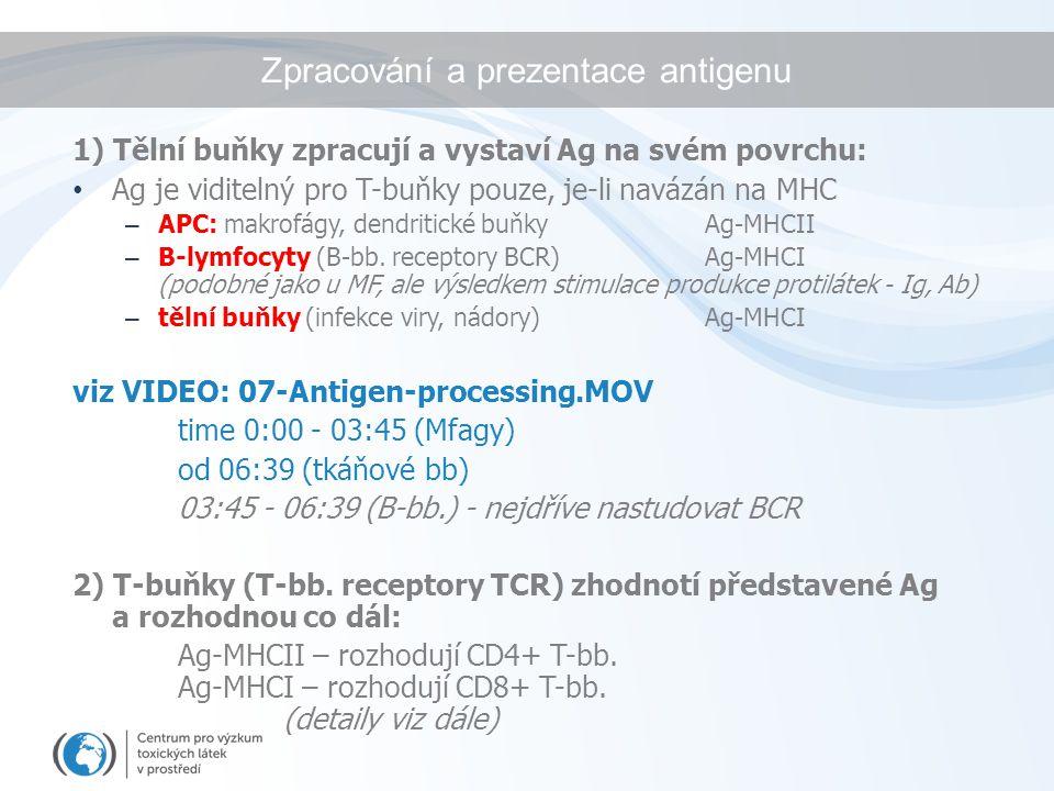 Zpracování a prezentace antigenu