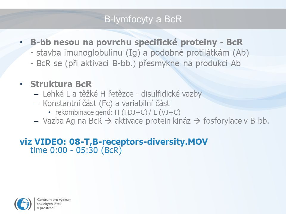 B-lymfocyty a BcR B-bb nesou na povrchu specifické proteiny - BcR