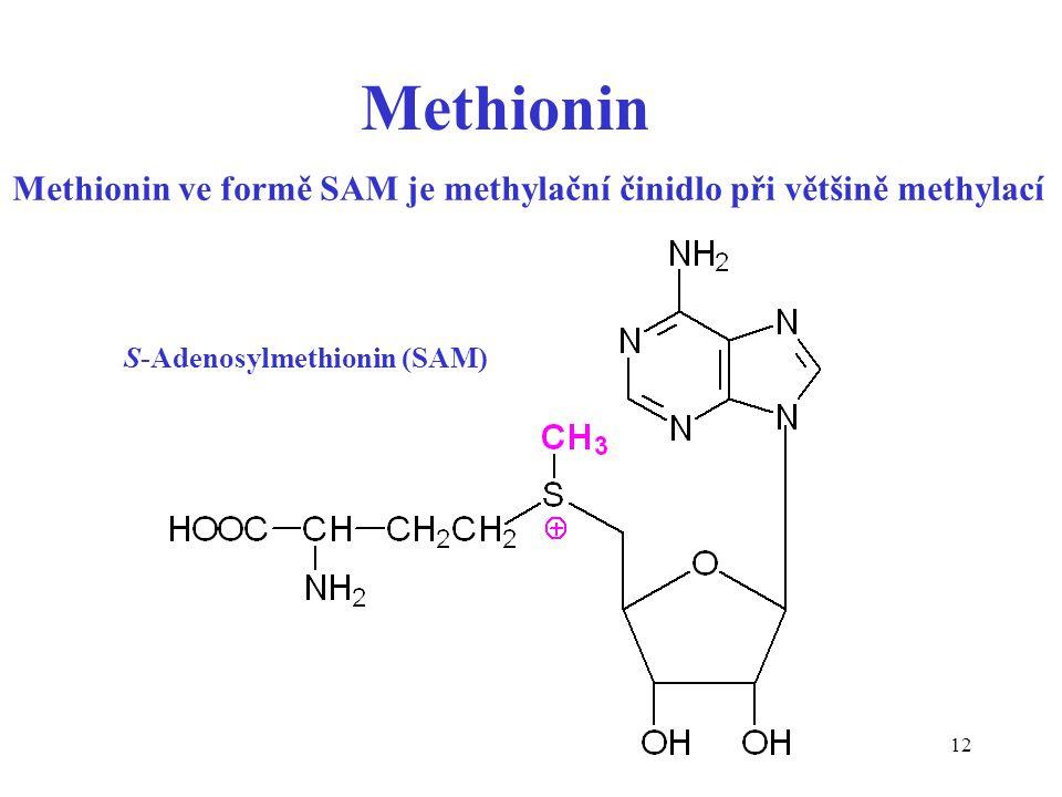 Methionin ve formě SAM je methylační činidlo při většině methylací
