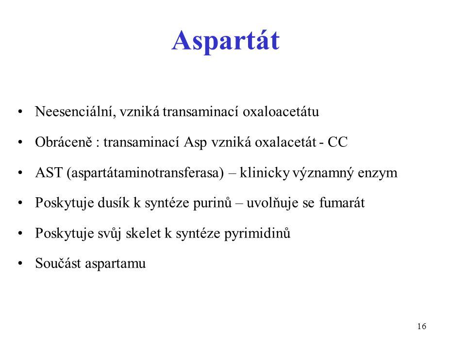 Aspartát Neesenciální, vzniká transaminací oxaloacetátu