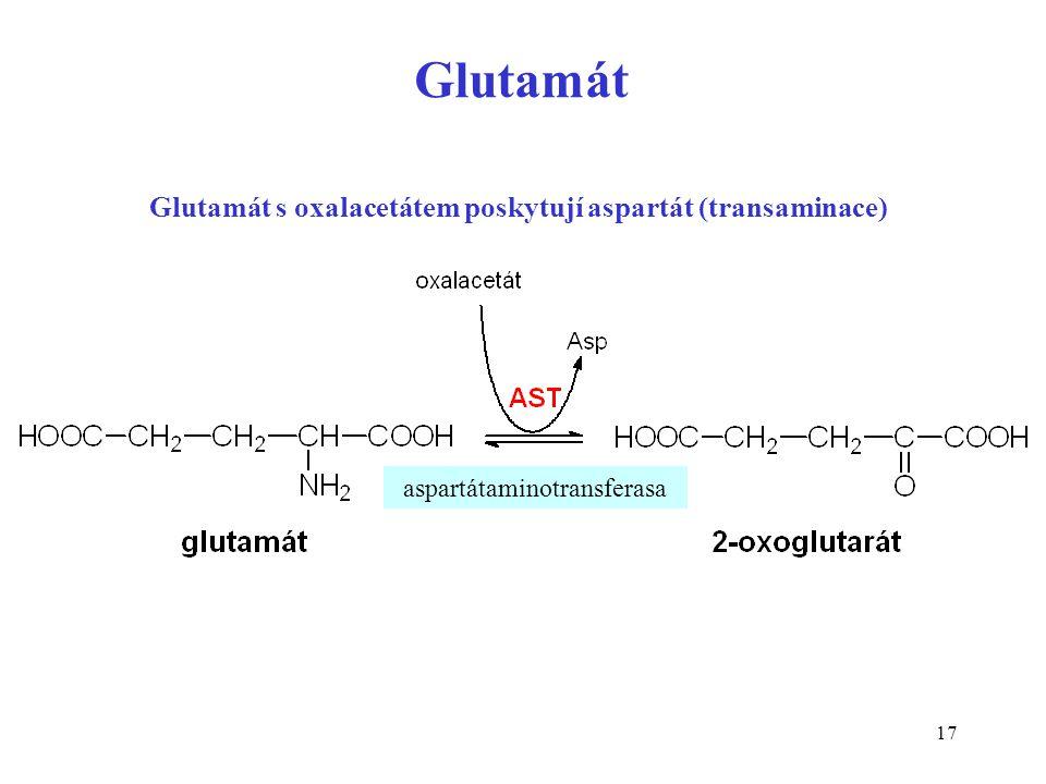 Glutamát s oxalacetátem poskytují aspartát (transaminace)