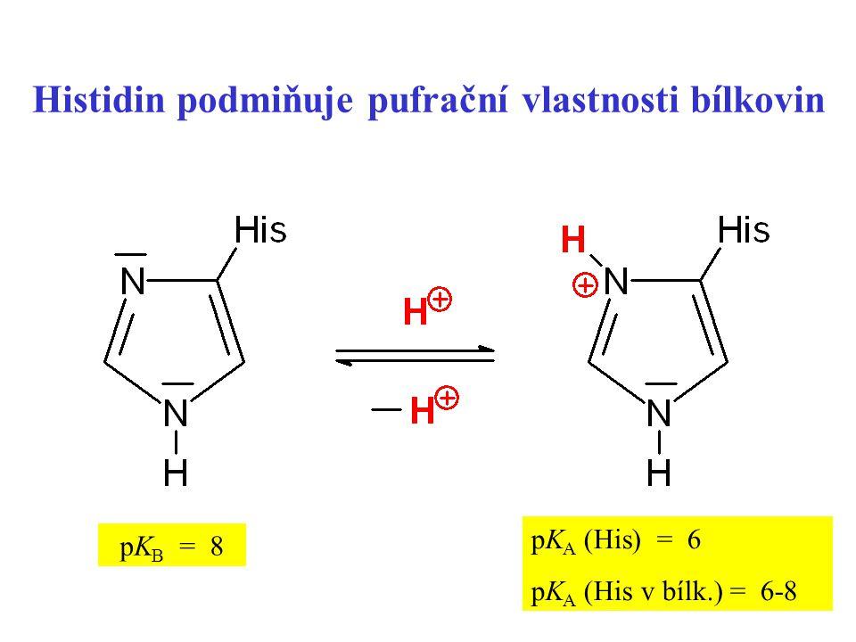 Histidin podmiňuje pufrační vlastnosti bílkovin