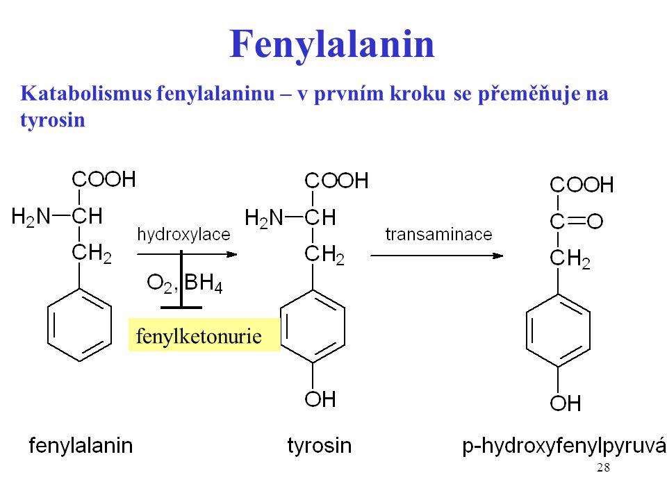 Katabolismus fenylalaninu – v prvním kroku se přeměňuje na tyrosin