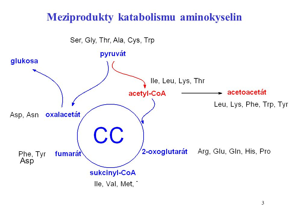 Meziprodukty katabolismu aminokyselin